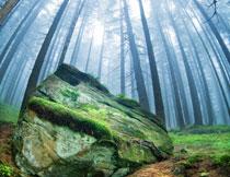 林中长满青苔的大石头高清图片
