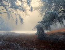 照进曙光的树林全景高清图片