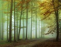 秋冬季节树林自然风光高清图片