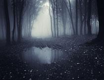 树林中隐约可见的风光高清图片