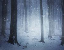 飘着雪的树林自然风景高清图片