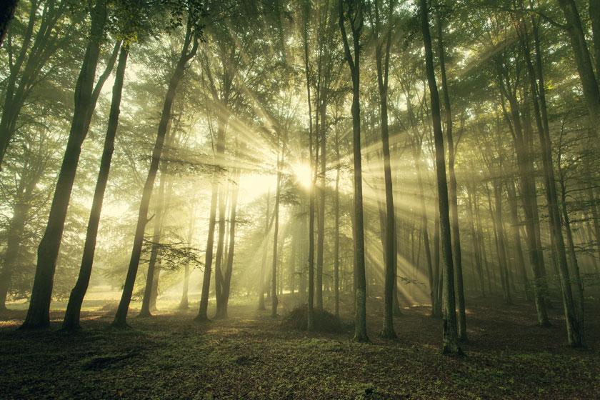 > 素材信息   关键字栏: 自然风景风光树木树林大树雾气阳光光线逆光