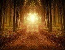 树林小路风景逆光摄影高清图片