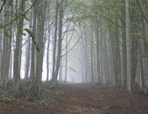 暮春时节树林风光摄影高清图片