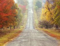 秋季在道路两旁的树木高清图片