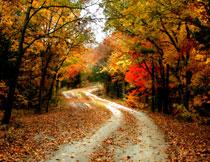道路两边染上秋色的树高清图片