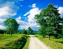 蓝天白云大树风光摄影高清图片