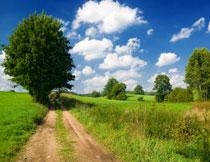 天空白云大树草丛摄影高清图片