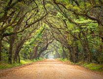 林荫大道自然风景摄影高清图片