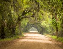 在路旁的景观树木摄影高清图片
