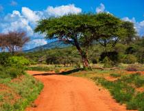 蓝天白云大树道路风光高清图片