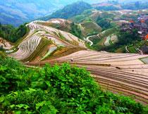 丘陵地貌梯田自然风景高清图片