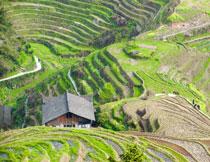 房子与在山坡上的梯田高清图片