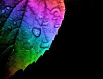 炫彩树叶上的水珠特写高清图片