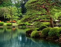 公园湖畔树木景观摄影高清图片