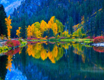 染上了秋色的湖畔树木摄影图片