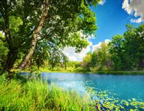 蓝天湖畔郁葱树林风光高清图片