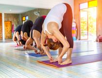 运动馆里的瑜伽美女们高清图片