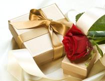 丝滑布上的玫瑰花摄影高清图片