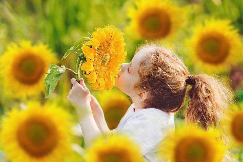 在闻着葵花香的小女孩高清图片