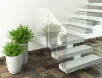 楼梯转角处的绿色植物高清图片