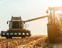 在进行收割作业的农机高清图片