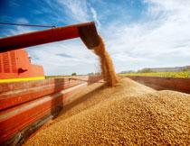 在脱粒作业的农机摄影高清图片