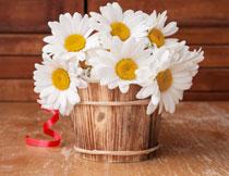 木桶里的白色菊花摄影高清图片