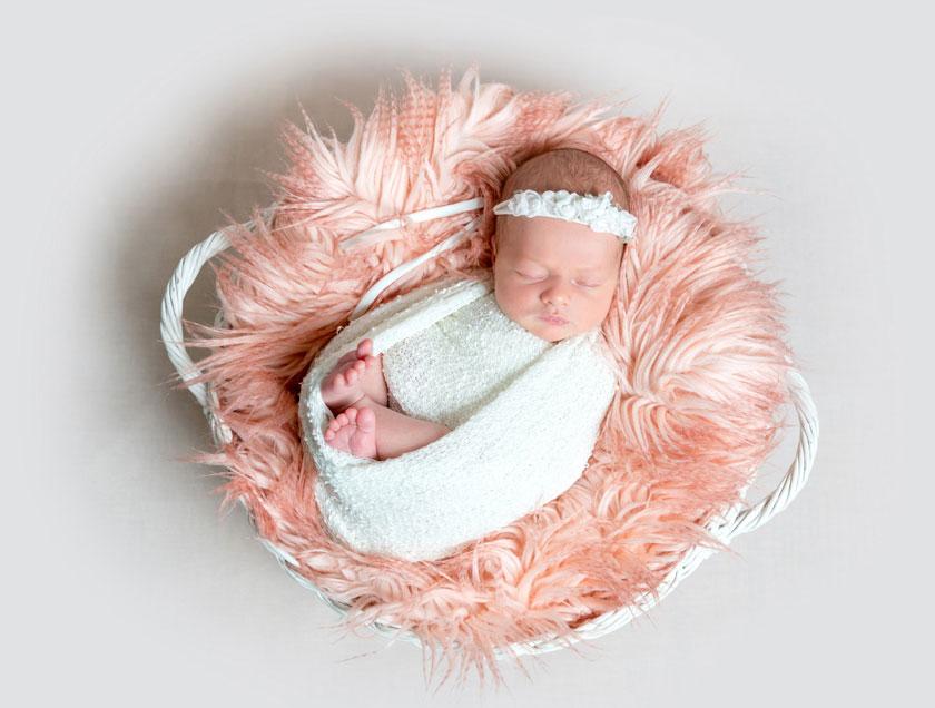 在篮子里睡觉的小可爱高清图片