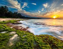 日出时分大海树林风景高清图片