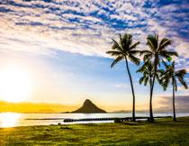 海水椰树天空阳光摄影高清图片