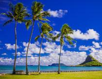 岛屿与海边的椰树摄影高清图片