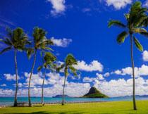 蓝天白云大海椰树风光高清图片