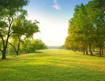 河边的树木与草地摄影高清图片