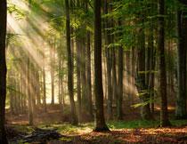 阳光照射到的树林摄影高清图片