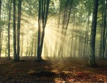 洒满了阳光的树林摄影高清图片