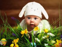 躲在花草丛后面的宝宝高清图片