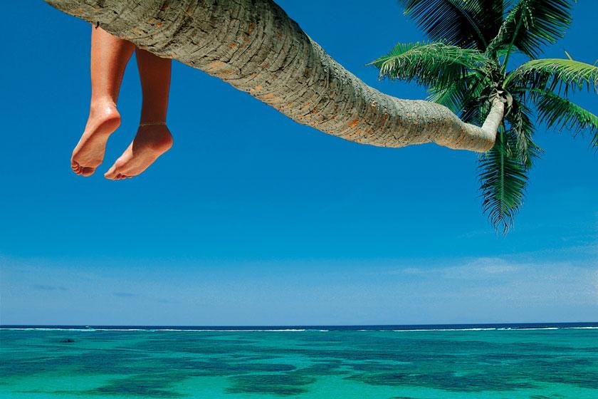 延伸到海面之上的椰树高清图片