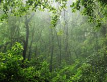 雾气笼罩中的丛林摄影高清图片