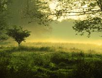 清晨雾气中的草丛树林高清图片