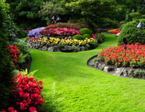 公园花卉植物风景摄影高清图片