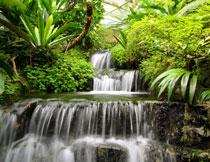 丛林植物瀑布风光摄影高清图片
