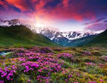 雪山云彩与花草丛摄影高清图片