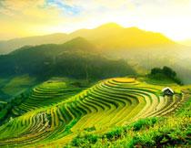 山间梯田自然风景逆光摄影图片