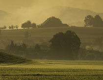 雾气中的树木群山风光高清图片