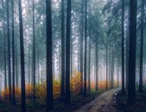 被薄雾笼罩的树林摄影高清图片