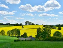 天空云朵与油菜花摄影高清图片