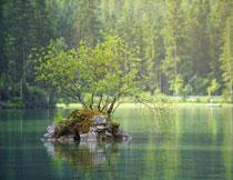 水中土堆上的小树摄影高清图片