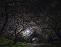 樱花道路夜晚灯光照明高清图片