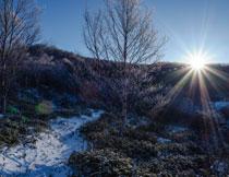 雪后的山间树木等摄影高清图片